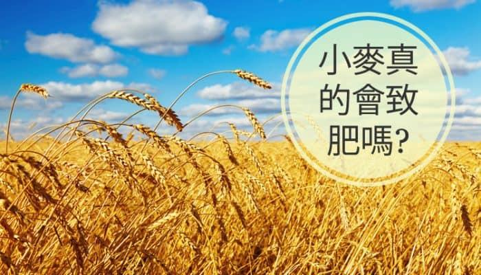 小麥真的會致肥嗎?